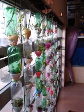 חוות חלון גידול צמחים